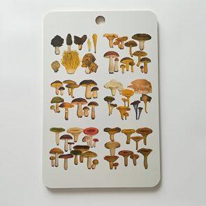 iso-leikkuulauta-sienikartta