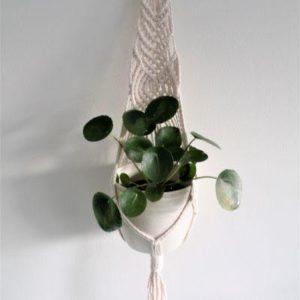 Jade-amppeli valkoinen